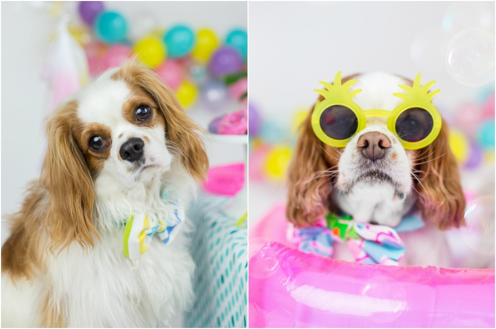 summer-dog-party-one-stylish-party